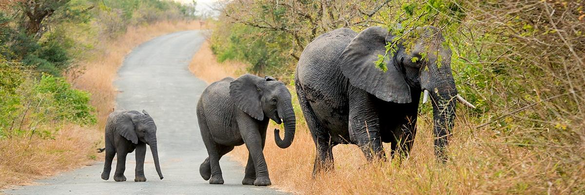 Elephant Family 8x24