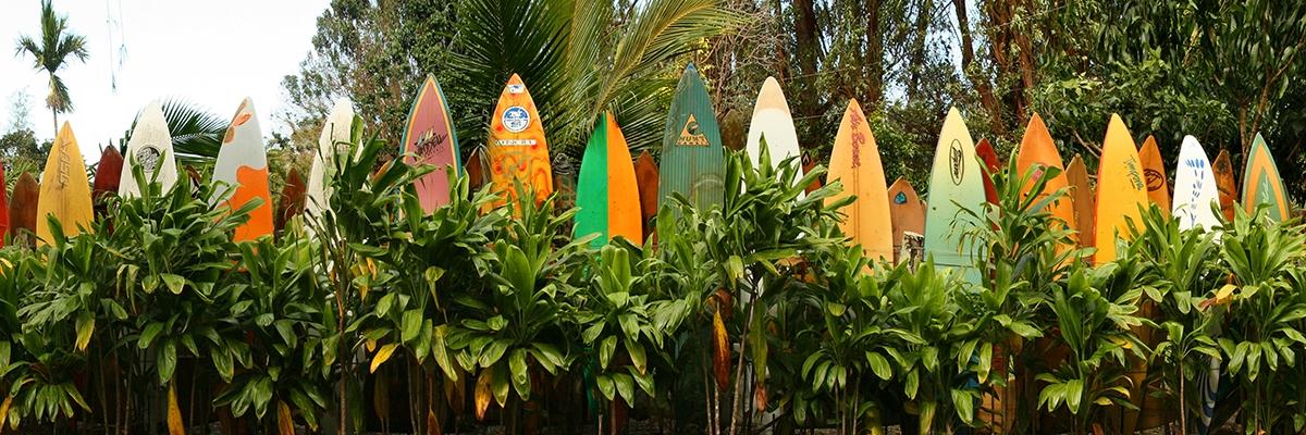 Maui Surfs Up