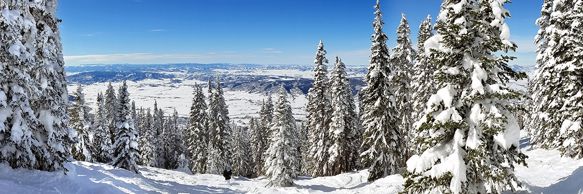 Steamboat Snow covered Trees