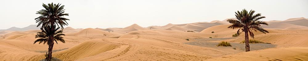 web Sahara trees