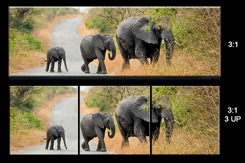 sheet Elephant Family