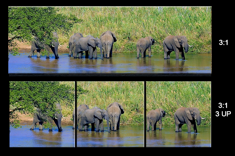 sheet Elephants